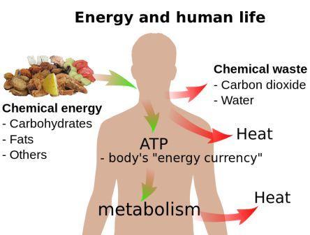 energy and human life