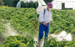 Spraying chemical on plants