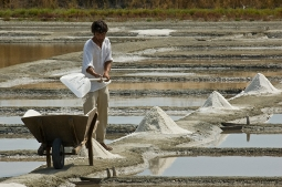 sea salt farmer harvesting salt